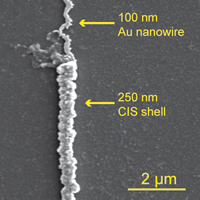 SEM of an Au/CIS core-shell nanowire